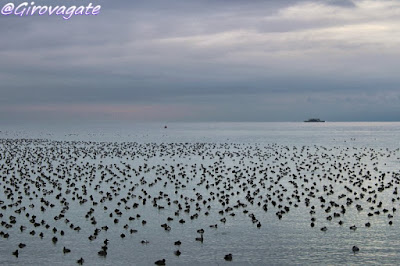 isla mainau lago costanza