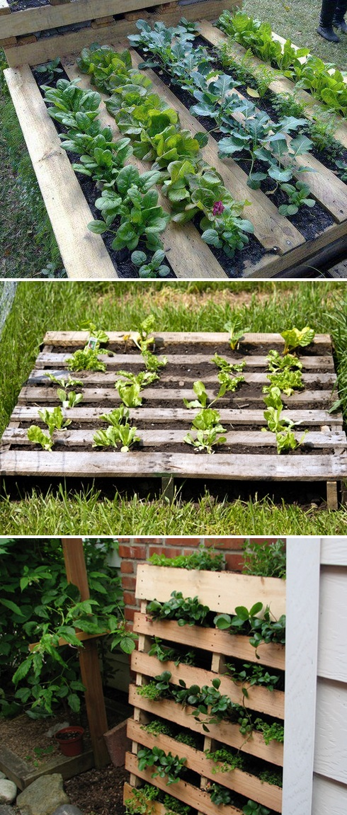 using a pallet as a garden bed