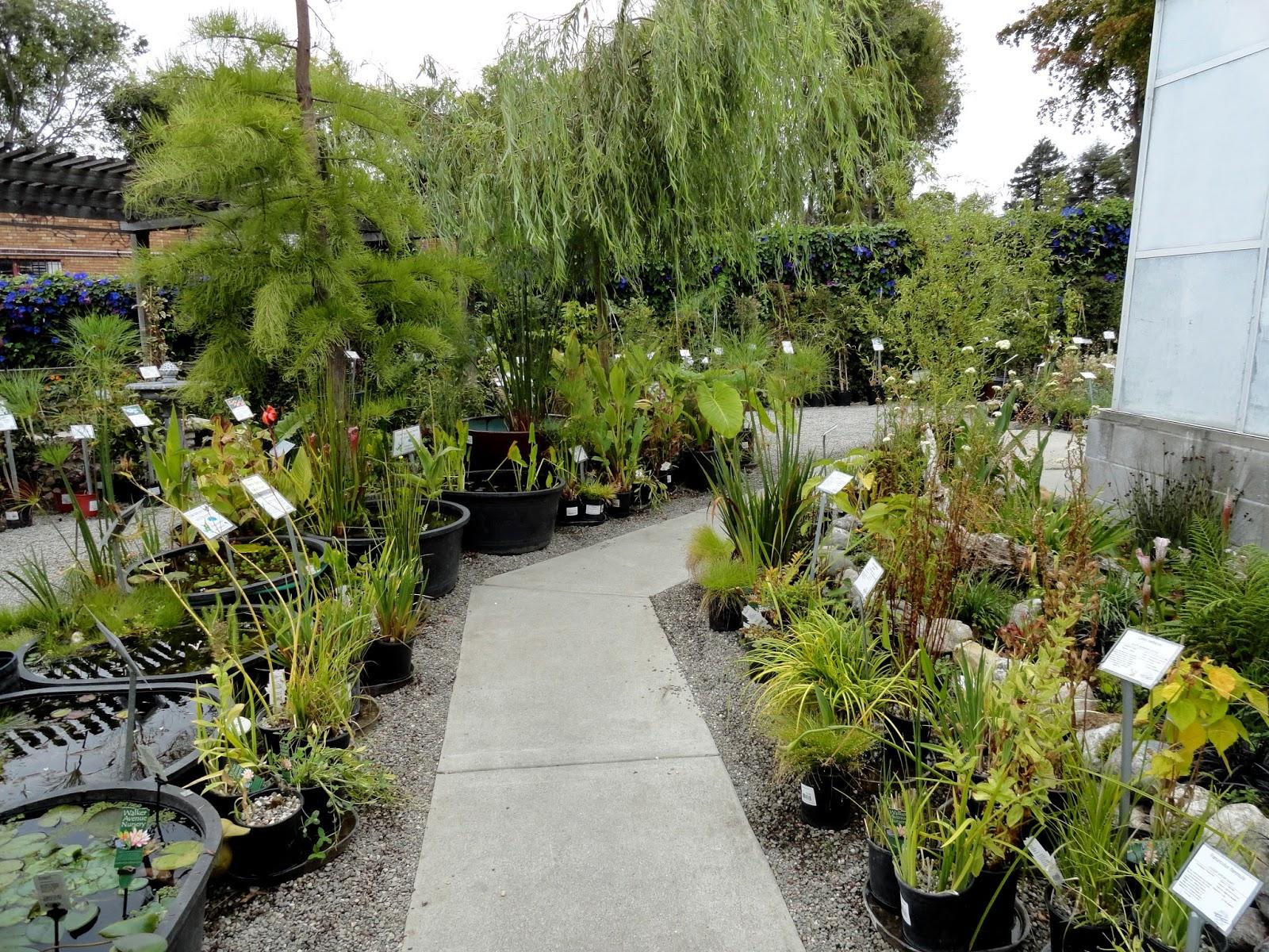 danger garden Visiting Berkeley Horticultural Nursery