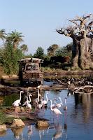Kilimanjaro Safaris, Animal Kingdom, Disney