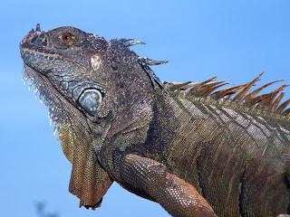 ملف كامل عن اجمل واروع الصور للحيوانات  المفترسة   حيوانات الغابة  10