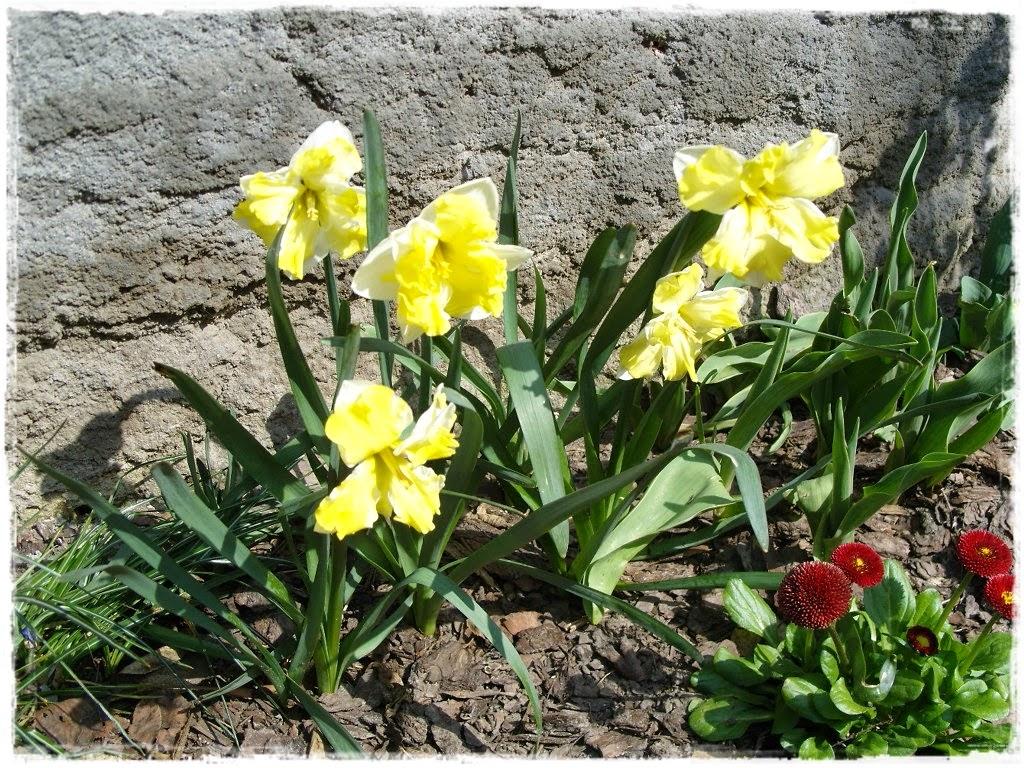 Wiosna kwitnie.