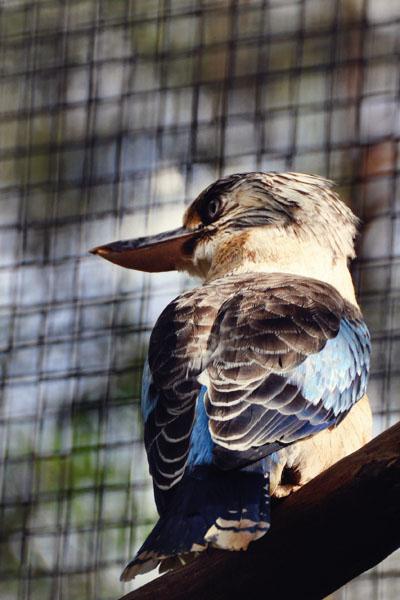 kookaburra reptile park