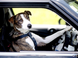 New Zealand's Driving Dogs