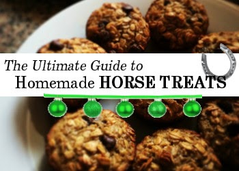 homemade horse treat recipes