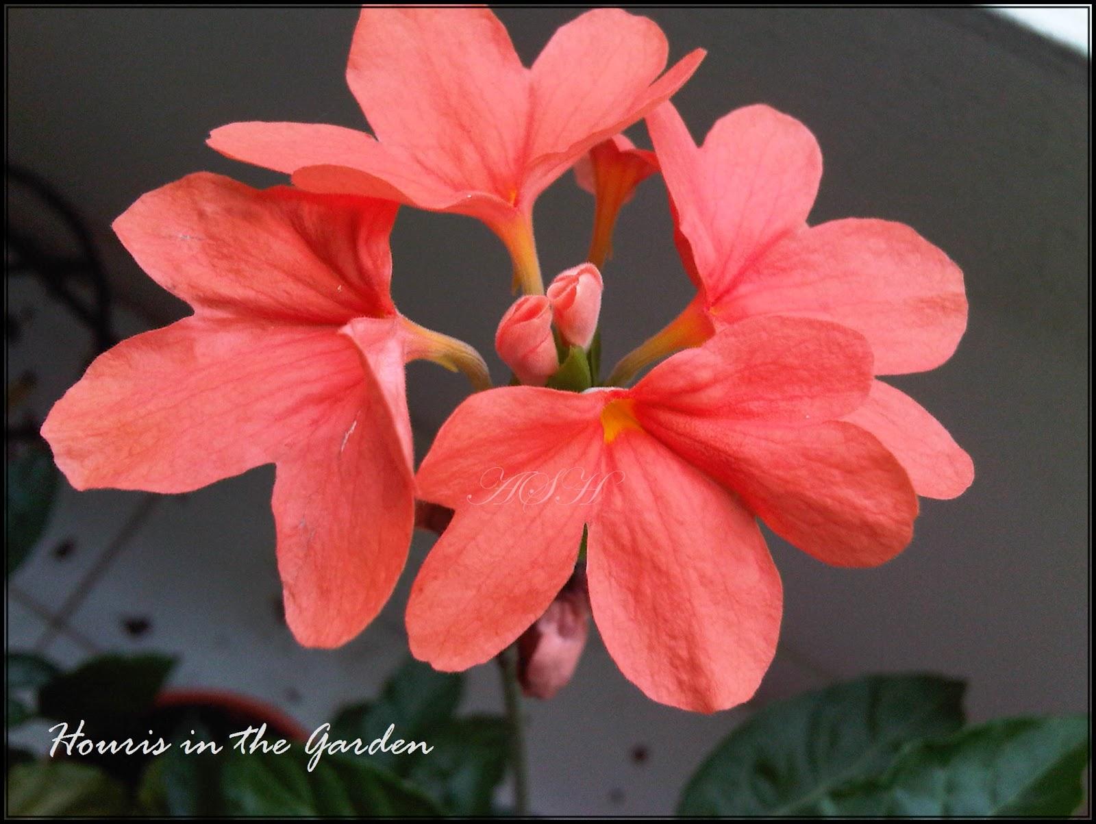 Houris in the Garden: 2012