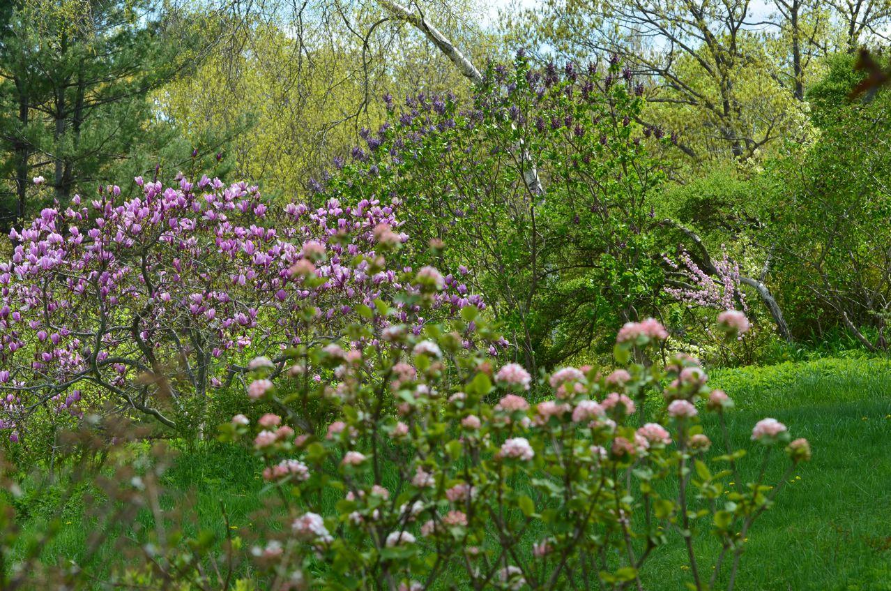 Flower Hill Farm Spring Stretching Towards The Sky Bird
