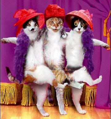 CatsDancingRedHats+SOCIETY.jpg