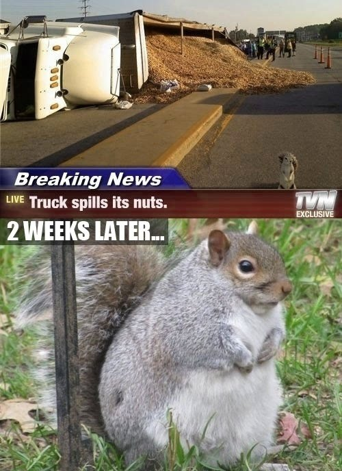 Breaking News - Truck Spills Its Nuts - 2 Weeks Later