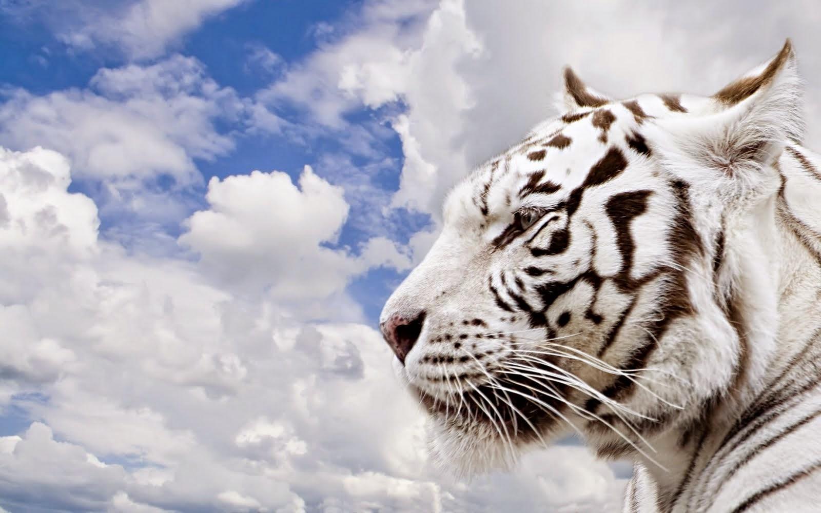 beautiful animals full hd wallpapers free download