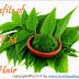 Benefits of Neem For Hair