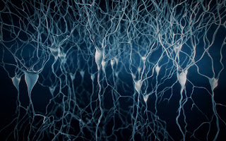 How Growth Factors Contribute To Long-Term Memory Formation