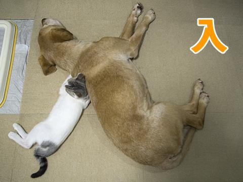 犬と子猫の人文字