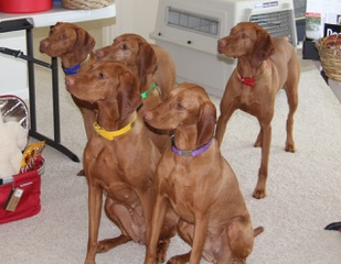 More of Lily's family. L to R Beckett, Q, Diamond, Lily, and Finley in back