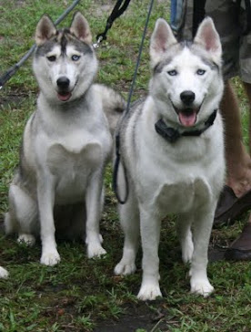 Sasha and Myshka