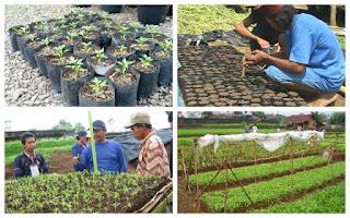 Membuat media persemaian hortikultura