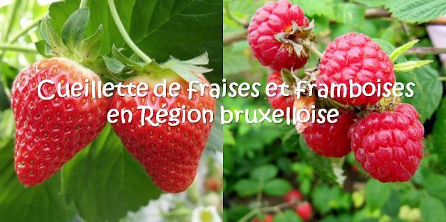 FRUIT TIME - Cueillette de fraises de framboises et de fleurs en self-service à Bruxelles - Aux portes du Pajottenland - Bruxelles-Bruxellons