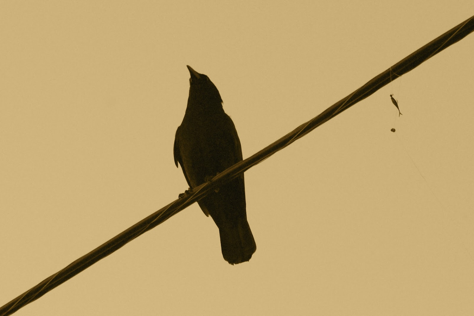 Bird on a wire template - photo#16