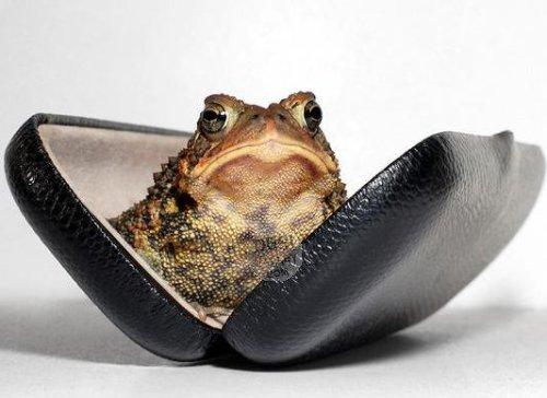 Frog in Ring Box