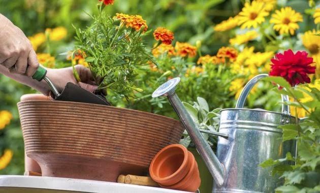 Noti t cnico econom a y turismo plantas que no necesitan sol - Plantas de interior que no necesitan luz ...
