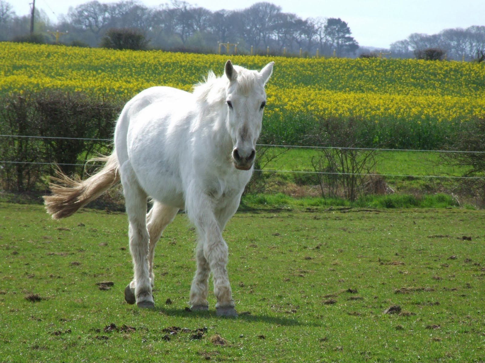 The gallery for most beautiful white horse in the world for Beautiful horses