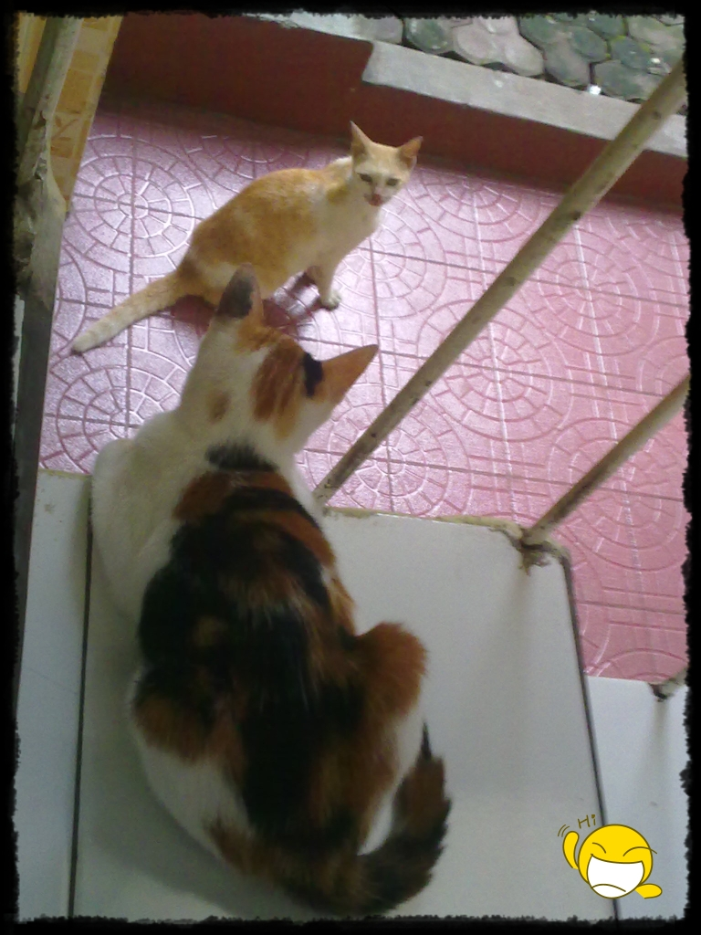 Cerita Hari Ini Parade Foto Kucing