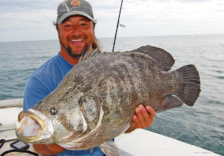 Big fishes of the world tripletail lobotes surinamensis for P o fish