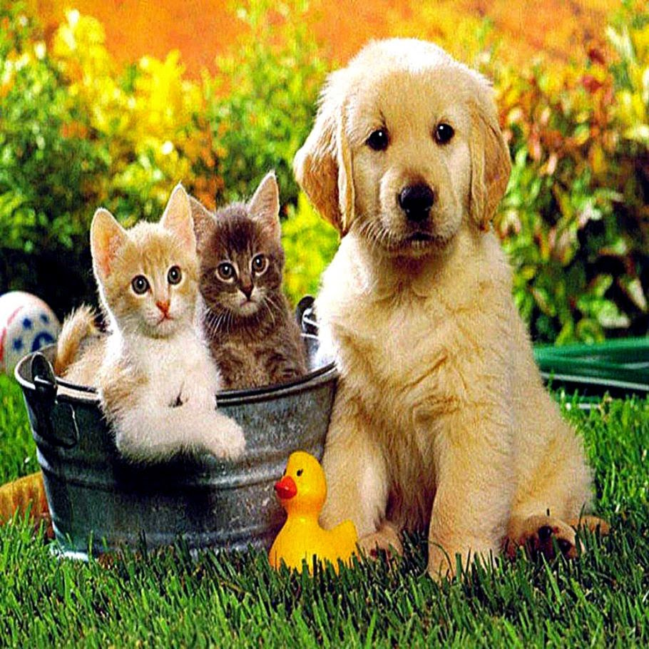 Cute dog and cat friends - photo#10