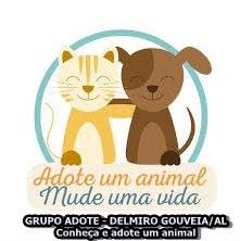 Grupo Adote - Delmiro Gouveia/AL Conheça e adote um animal
