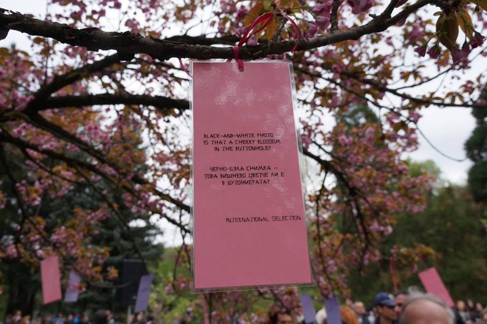 Cherry Blossom 2nd Haiku Contest Sofia, Bulgaria