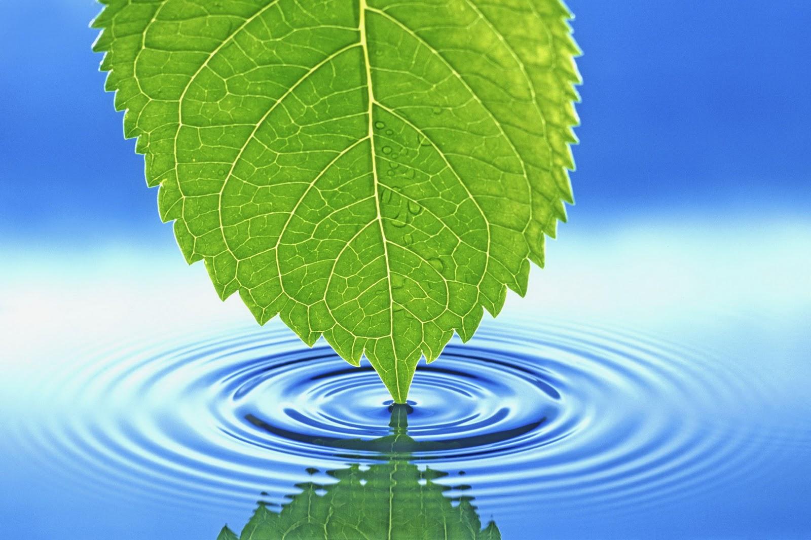 High Resolution Widescreen Nature