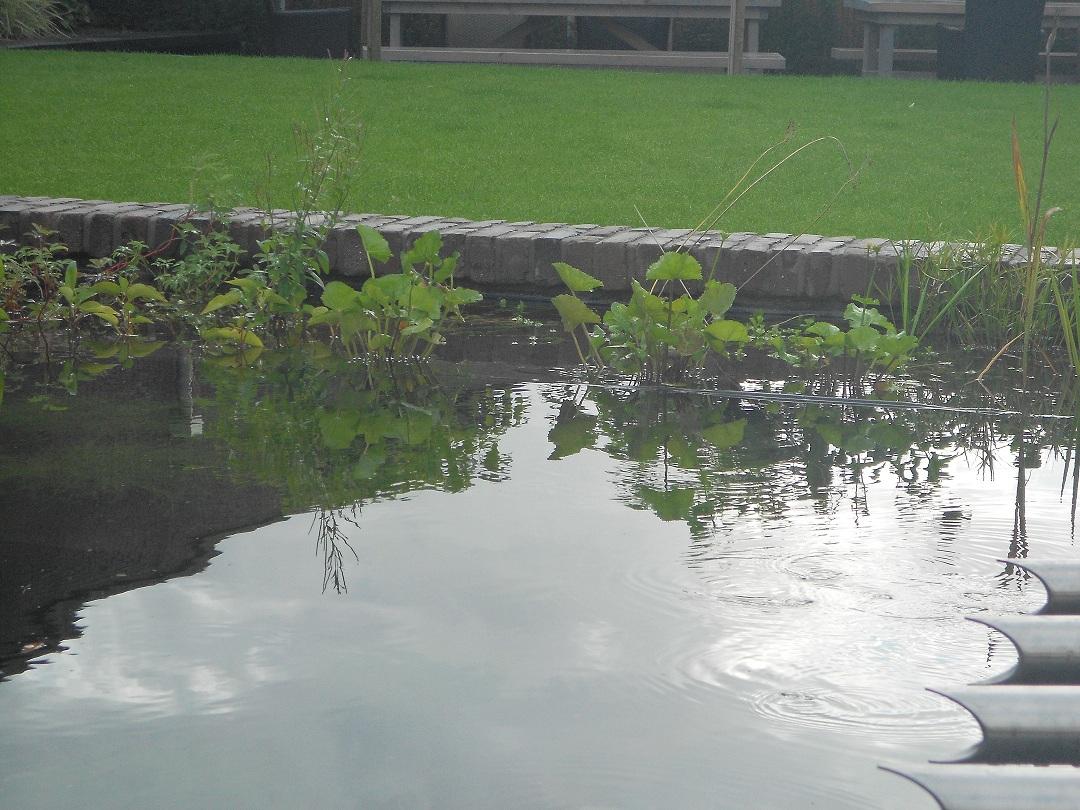 Cyntuinen tuinontwerp &  advies: september 2011