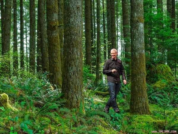 Apple công bố dự án mua lại 36.000 hecta rừng
