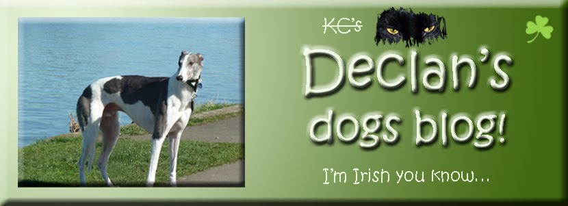 Declan&#39;s Dogs Blog
