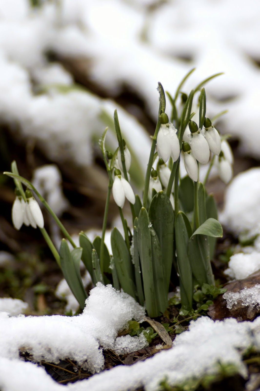 Wishing away winter and pining for spring