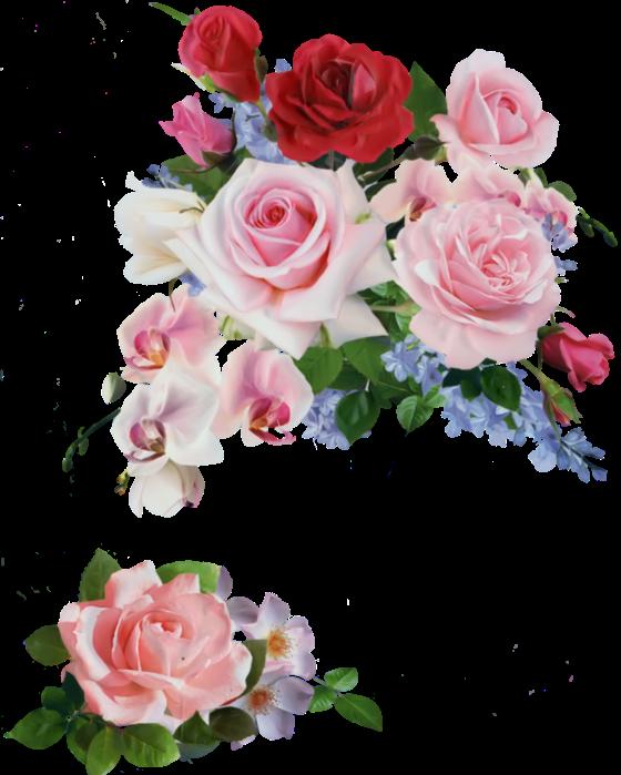 Красивые цветы для фотошопа