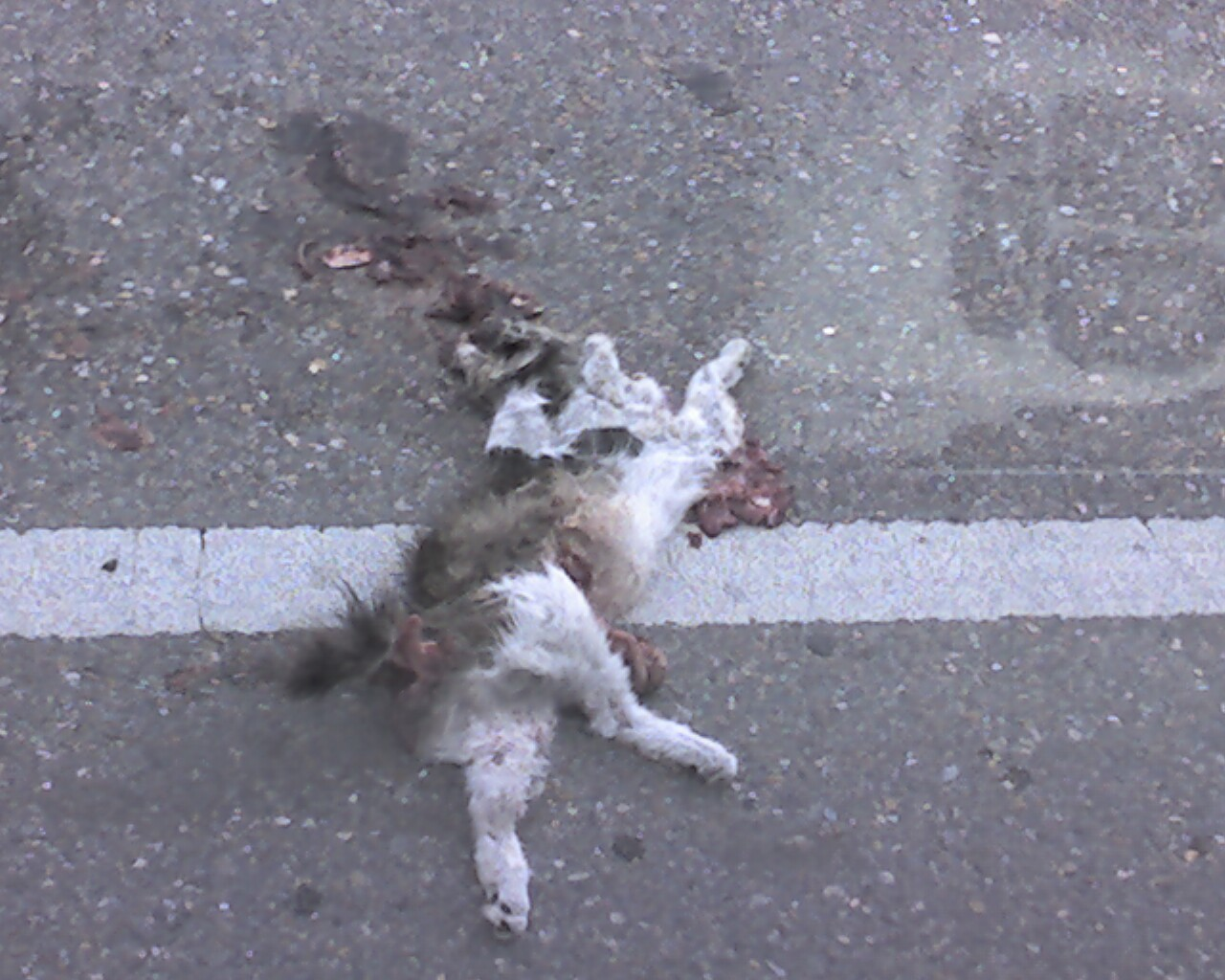 dead cat