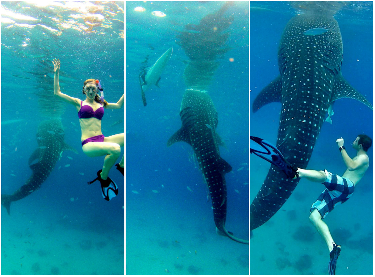 snorkeling with whale sharks oslob philippines