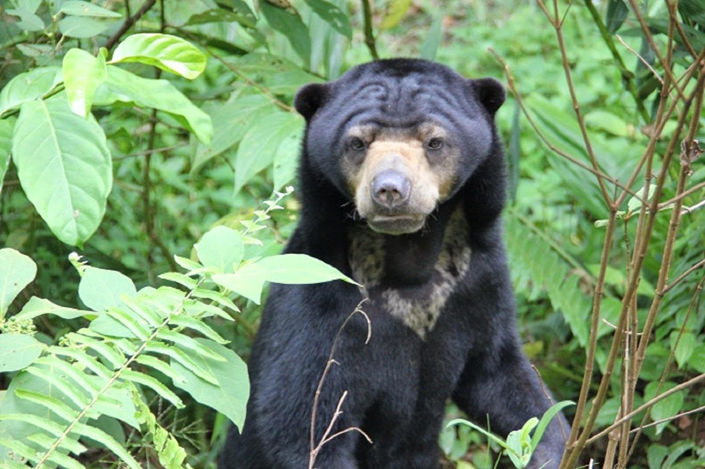 gambar beruang madu - gambar beruang - gambar beruang madu