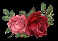 imágenes vintage rosa