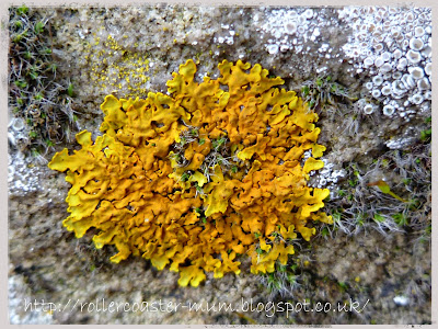 lichen on stone wall