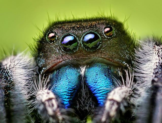 Macro photography of a spider at Dgeneralist