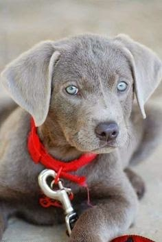 5 Dogs With Adorable Blue Eyes