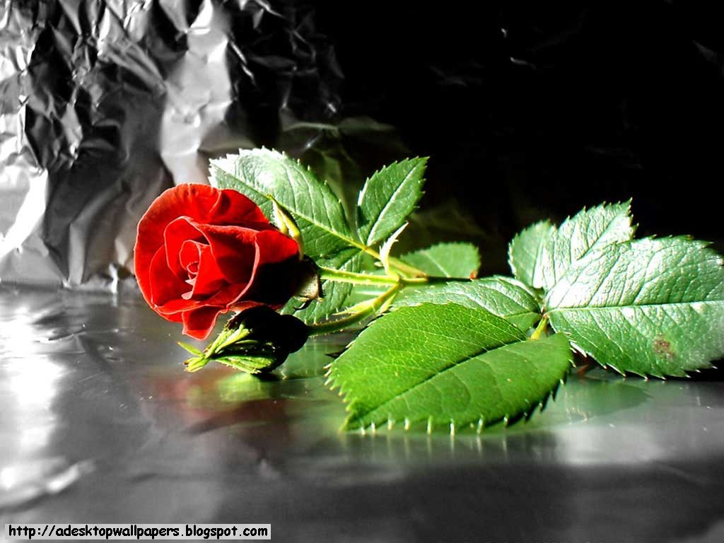 Rose Flower Desktop Wallpapers A Desktop Wallpapers