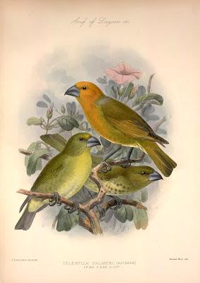 ilustración vintage de pájaros