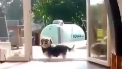 This dog thinks that the door is close