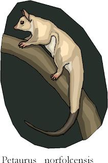 Squirrel Glider | Petaurus Norfolcensis Free Clipart
