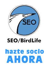 Qué es SEO/Birdlife?