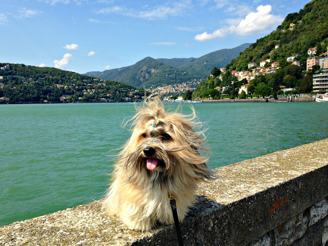 Rocco in Como, Italy dog friendly Como