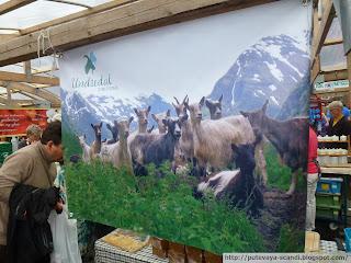 козы с Хардангера